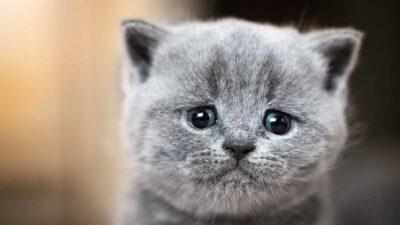 kucing untuk terapi